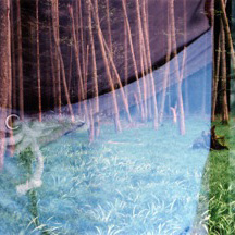 claudia schumann, from the series WOODS, 2004, various dimensions, photography